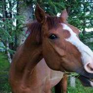 Our neighbors horse