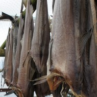 Drying cod to make bacalao soup