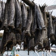Bacalao - drying cod