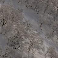 Signature of Japan tree skiing