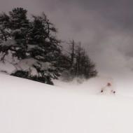The Dream Forest, Grands Montets, Chamonix