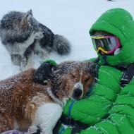 Ski touring dogs