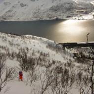 Lyngen tree skiing