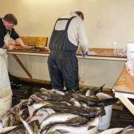 Getting a lesson in making cod filés