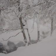 Japan tree skiing