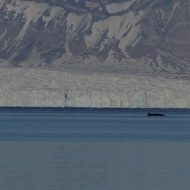Svalbard-ski-and-sail-0719